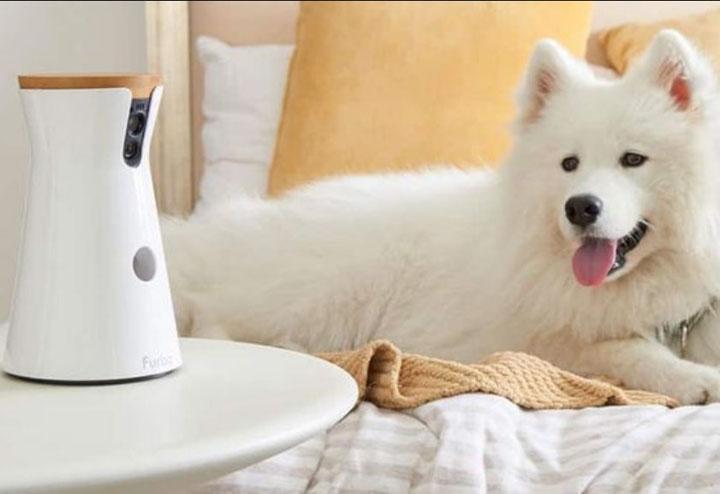 camera surveillance chien